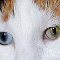 Cats Eyes Multi Colored by Lloyd Alexander