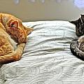 Cats by Raimond  van Donk