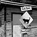 Cats Xing by Eric Tressler