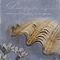 Catspaw Seashell by Betty LaRue