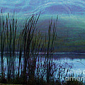 Cattails In Mist by Judi Bagwell