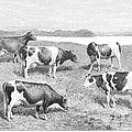 Cattle, 1888 by Granger