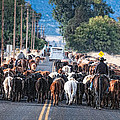 Cattle Drive 3 by Gary Rose