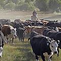 Cattle Drive by Judy Deist