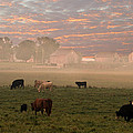 Cattle In The Fog by Randall Branham