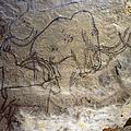Cave Art - Mammoth And Ibexes by Granger