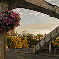 Caveman Bridge Arch And Flowers by Mick Anderson