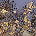 Cedar Rock by Joseph Yarbrough