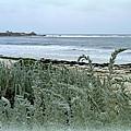 Celadon Seascape by Carla Parris