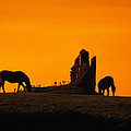 Celtic Horses In Sunset by Carl Purcell
