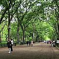 Central Park Arbor Walk Spring by Lorraine Devon Wilke