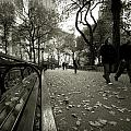 Central Park Bench by Sean Wray