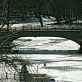 Central Park Bridge-winter by Anne Ferguson