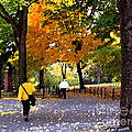 Central Park Fall Walk by Anne Ferguson