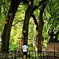 Central Park Jogging by Brian Jannsen