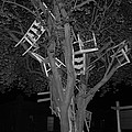 Chairy Tree by Michael Merry