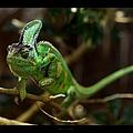 Chameleon by 1d110