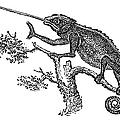 Chameleon by Granger