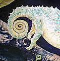 Chameleon Tail by Irina Sztukowski