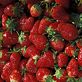 Chandler Strawberries by Photo Researchers