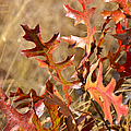 Changing Colors by Carolyn Marshall