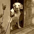 Charleston Shop Dog In Sepia by Suzanne Gaff