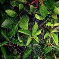 Charlotte's Web by Rick Berk