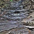 Chasing The Eternal Flame At Chestnut Ridge Park by Michael Frank Jr