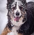 Chasing The Snow by Joye Ardyn Durham