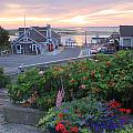 Chatham Fish Pier Summer Flowers Cape Cod by John Burk