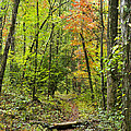 Chatooga Forest Trail by Barbara Northrup