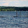Chautauqua Lake  by Rose Santuci-Sofranko