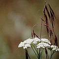Cheatgrass And Common Yarrow by One Rude Dawg Orcutt