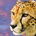 Cheetah by Power And Syred