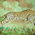 Cheetah by Sharon Tuff
