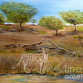 Cheetah Stops To Take A Drink by John Garland  Tyson