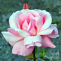 Cheri's Rose by Sami Martin