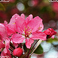 Cherry Blossom Greeting Card Blank With Decorations by Debbie Portwood