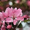 Cherry Blossom Photo Art And Blank Greeting Card by Debbie Portwood