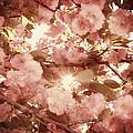 Cherry Blossom Sky by Amy Tyler