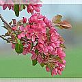 Cherry Blossom Spring Photoart by Debbie Portwood