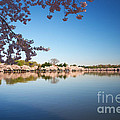 Cherry Blossoms Along The Tidal Basin by Susan Isakson