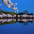 Cherry Blossoms And The Tidal Basin by Brian Jannsen