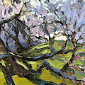 Cherry Blossoms by Jane Oriel