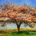 Cherry Tree by Lois Bryan