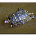 Chester River Turtle by Brian Wallace