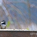 Chestnut-backed Chickadee In The Rain by Sean Griffin
