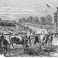 Chicago: Cattle Market by Granger
