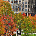 Chicago In Autumn by Mary Machare