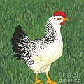 Chicken by Billinda Brandli DeVillez